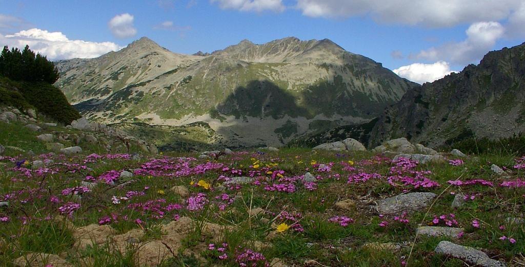 Pirin dağı park alanları